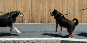 dogs-on-a-leash-540x268